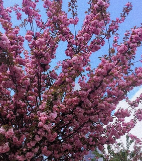 nature, pink and spring
