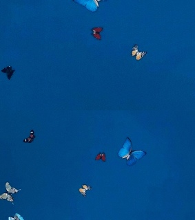 blue, butterflies and pattern