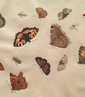 butterflies, printed and bugs