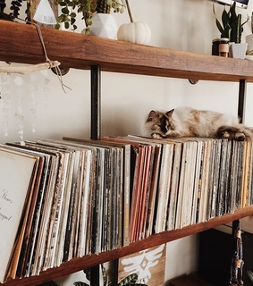 cat, record player and vinyl