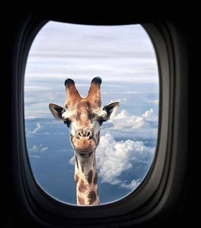 funny, giraffe and clouds