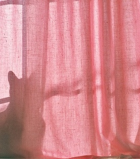 vintage, cat and pink