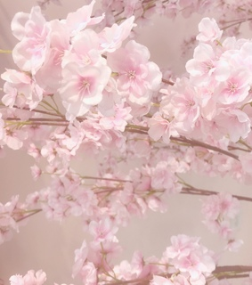 spring, petal and flowers