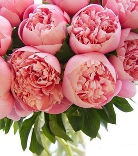 pretty, pink peonies and bouquet
