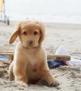 cute, adorable and puppy
