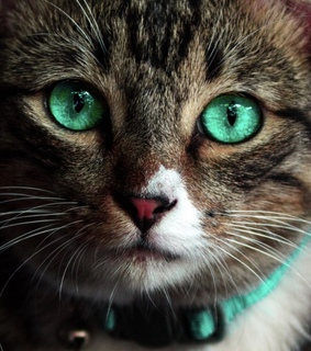 animal, cat and wallpapers