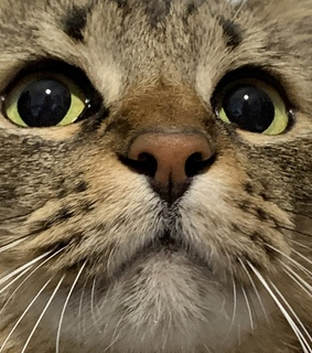 kind, kitty and eyes