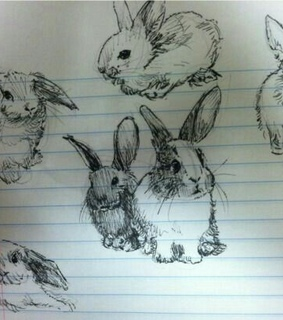 draw and bunny's