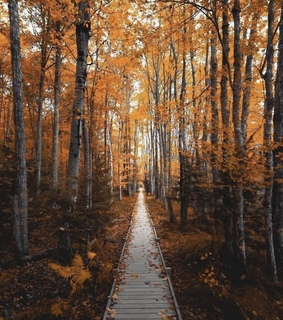 autumn, nature and aesthetic