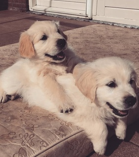 puppies, puppy and yes