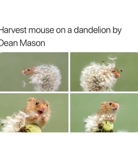 mouse, lol and hilarious