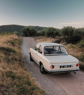 vintage, nature and old looking cars