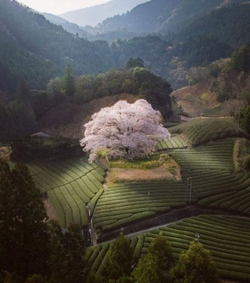 travel, landscape and sakura