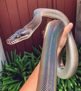 animal, snake and colors