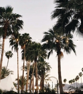 california, summer and palm