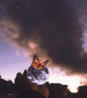 vintage, tumblr and butterfly