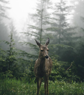 tumblr, deer and venado