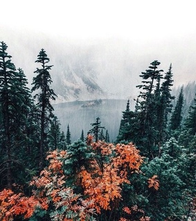winter, travel and autumn