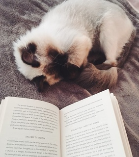 reading, cute and kitten