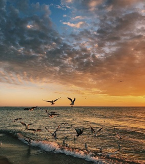 sky, sunset and birds