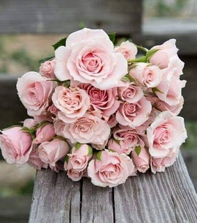 pretty, bouquet and pink roses