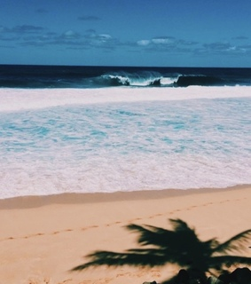 aesthetic, ocean and tropical