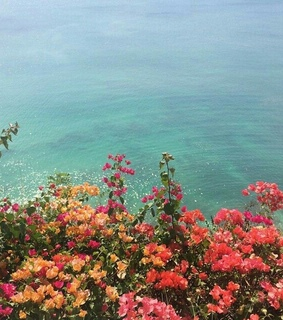 nature, flowers and sea