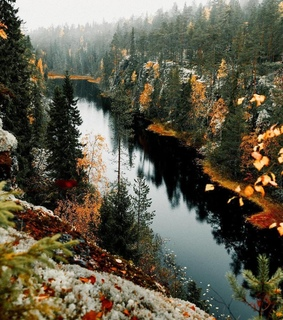 fall, foggy and forest