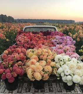 flowers, grunge and car