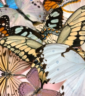 archive, photo pic and butterflies