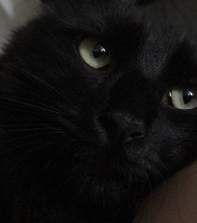 nose, cat and black