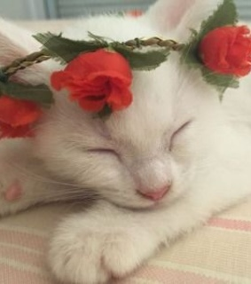 flowercrown, cute and beautiful