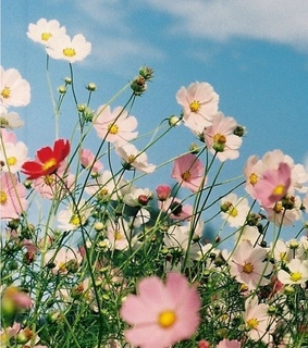field, bloom and dreamy