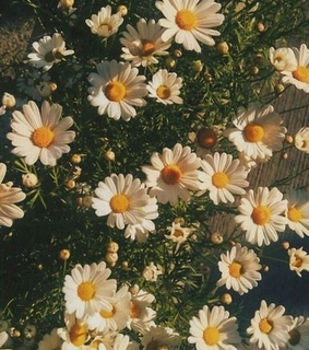 flower, summer and life