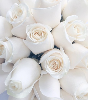 rose bouquet, lifestyle and bouquet