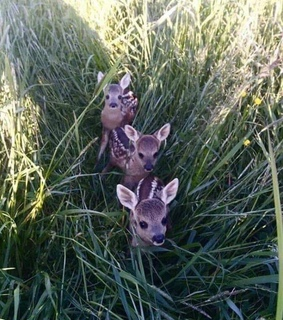 adorabke, babies and field