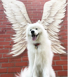 Angel Wings, dogs and graffiti