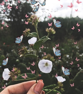 burttefly, inspiration and flowers