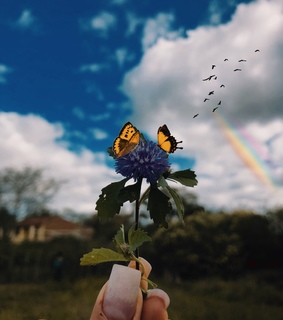 photography, blossom and butterfly