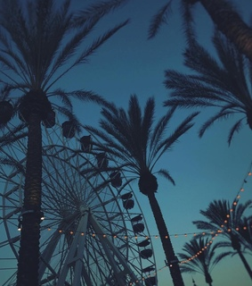 lights, santa monica pier and palm trees