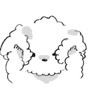 poodles, transparent and stickers