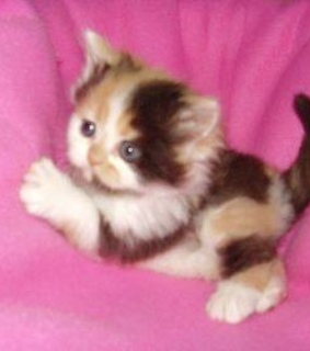 pink, kitten and soft