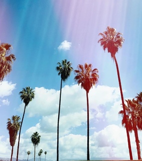 Taylor Swift, lover and palm trees
