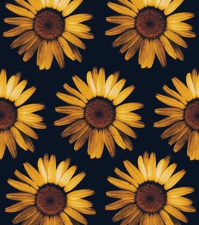 wallpaper, background and sunflower