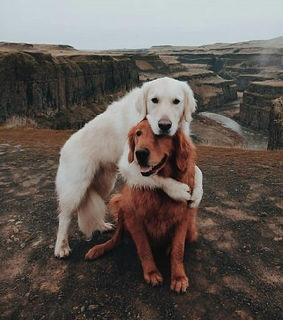 pets, cute and puppy
