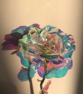 photography, iridescent and picture