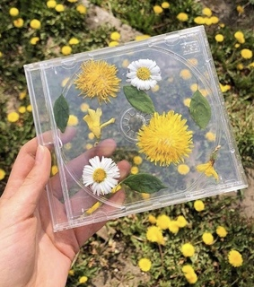 daisies, cute and aesthetic