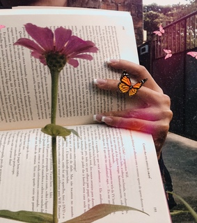 butterfly, tumblr and photography
