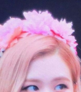 preview, rose and cute