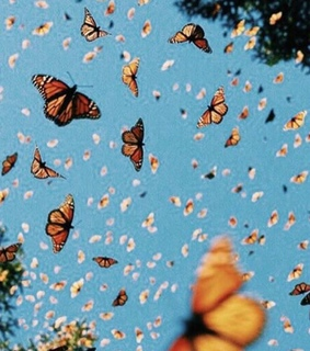 header, butterflies and background pic